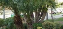 V2-palmslg